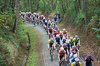peloton on 1 of the cobbled sections<br /> <br /> Dwars door het Hageland (1.1)<br /> 1 Day Race: Aarschot > Diest (194km)