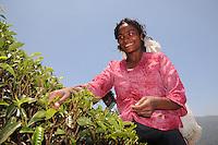 Severani the twenty year old woman at her work, in Nuwara Eliya Sri Lanka, to tea leaf collecting for tea farmers and digestion.(Photo.:Stefan Nobel-Heise)......Tee,leaf, tea, bush,nature, Natur, Landwirtschaft  Hochland Sri Lanka Teeplantage, Tea Ground, diggest, colection,gathering, Mountains Woman, Worker, Field,Sommer, Travel, reisen, Buisne tea affair, indian ocean, ..Subtropen,