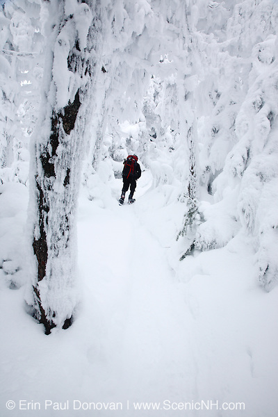 Franconia Notch State Park - Hiker makes his way through snow covered forest along the Kinsman Ridge Trail during the winter months in the White Mountains, New Hampshire USA