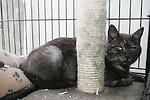 DAR Cats 24/07/10