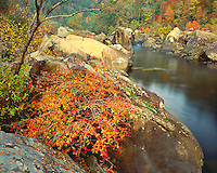Fall color along the Big South Fork of the Cumberland River; Big South Fork National River & Recreation Area, KY