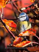 Carl, ANIMALS, wildlife, photos(SWLA3887,#A#)
