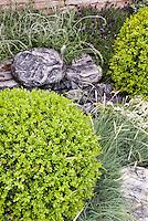 Boxwood globes, Festuca ornamental grass, rocks, stone wall. Spanish lavender, Lavandula stoechas, Design by Geoff Whiten
