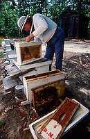 A beekeeper with his beehives and tools as he harvests honey from his hives.
