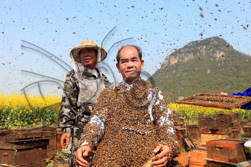 Le corps recouvert d'abeilles, Monsieur Yang Chuan attend tranquillement que ses aides le débarrassent des milliers d'abeilles.///His body covered in bees, Mister Yang Chuan calmly waits while his assistants get the thousands of bees off him.