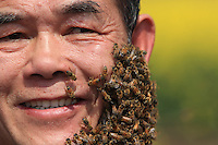 Luoping, Yunnan.  Yang Chuan's face covered in thousands of bees.