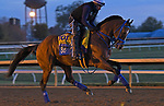 November 5, 2020: By My Standards, trained by trainer W. Bret Calhoun, exercises in preparation for the Breeders' Cup Classic at  Keeneland Racetrack in Lexington, Kentucky on November 5, 2020. Jessica Morgan/Eclipse Sportswire/Breeders Cup