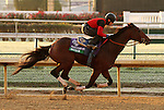 Switch, trained by John Sadler and to be ridden by Joel Rosario , exercises in preparation for the 2011 Breeders' Cup at Churchill Downs on October 30, 2011.