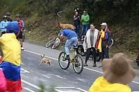 EL VERJON - COLOMBIA, 16-02-2020: Un aficionado monta su bicicleta con su mascota  durante la sexta etapa del Tour Colombia 2.1 2020 con un recorrido de 182,6 km que se corrió entre Zipaquirá y El Once Verjón, Cundinamarca. / A cycling fan goes with his pet during the sixth stage of 182,6 km as part of Tour Colombia 2.1 2020 that ran between Zipaquira and El Once Verjon, Cundinamarca.  Photo: VizzorImage / Darlin Bejarano / Cont