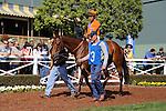APRIL 20, 2014: Beholder, ridden by Gary Stevens wins the Santa Lucia Stakes at Santa Anita Park in Arcadia, CA. Zoe Metz/ESW/CSM