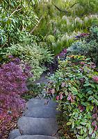 Stone step stairway entering California hillside garden with foliage shrubs. Diana Magor Garden
