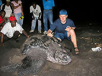 local people and marine biologist involved in sea turtle watching, nesting leatherback sea turtle, Dermochelys coriacea, Dominica, West Indies, Caribbean, Atlantic