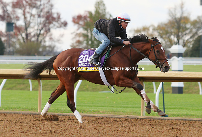 Horologist, trained by trainer William I. Mott, exercises in preparation for the Breeders' Cup Distaff at Keeneland Racetrack in Lexington, Kentucky on November 1, 2020. /CSM