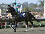 Aug. 8, 2009.Zenyatta ridden by Mike Smith, wins the Clement l. Hirsch Stakes at Del Mar Throughbred Club, Del Mar, CA