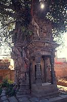 Temple in Pipal tree, Bhaktapur, Nepal.