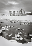 Yellowstone National Park, Wyoming: Cottonwood trees and the Lamar River in winter