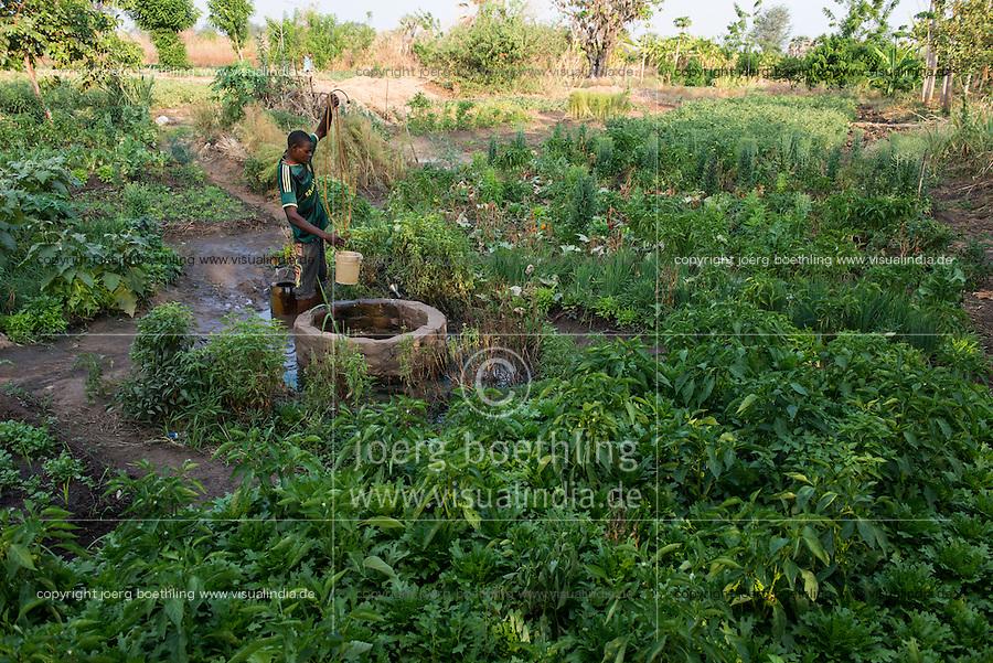ZAMBIA, Chipata, farmer irrigates vegetable farm with water from well / SAMBIA, Chipata, COMACO Verarbeitung von Erdnuessen von Vertragsfarmern, GIZ Projekt Gruene Innovationszentren, Dorf Lupande, Kleinbauern, Feldfrucht Diversifizierung, Anbau und Bewaesserung von Gemuese