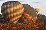 Hot air balloons sail over autumn vineyards in Napa Valley, California.