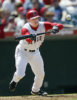 Alfredo Amezaga of the Los Angeles Angels bunts during a 2002 MLB season game at Angel Stadium, in Anaheim, California. (Larry Goren/Four Seam Images)