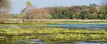 Seasonally flooded wetland and lagoon. Pousada Caiman. Mato Grosso do Sul, southern Pantanal.