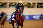 DEL MAR, CA - NOVEMBER 01:  Sharp Azteca, owned by Gelfenstein Farm and trained by Jorge Navarro, exercises in preparation for the Breeders' Cup Las Vegas Dirt Mile at Del Mar Thoroughbred Club on November 01, 2017 in Del Mar, California. (Photo by Alex Evers/Eclipse Sportswire/Breeders Cup)