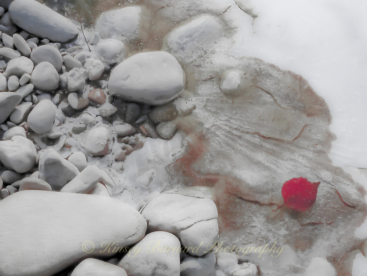 """""""RED LEAF""""<br /> <br /> Remnant of Fall, a solitary red leaf lies embedded in ice, surrounded by calcified river rocks."""