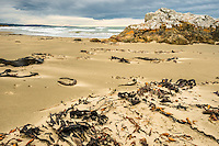 Seaweed and brooding skies on beach near Nugget Point, Catlins, Southland, New Zealand