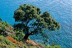 Italie. Italia. Sardaigne. Sardinia.hene liège  sur la côte est
