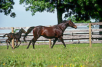 Mother and newborn foal running in meadow, summer, midwest