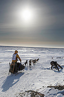 Alan Stevens on the trail a few miles from the finish line in Nome on Saturday March 21, 2015 during Iditarod 2015.  <br /> <br /> (C) Jeff Schultz/SchultzPhoto.com - ALL RIGHTS RESERVED<br />  DUPLICATION  PROHIBITED  WITHOUT  PERMISSION