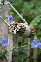 """Wildbienen-Nisthilfe aus Bambusbündel, Bambus-Bündel, Bambus, Bambusröhrchen, Bambus-Röhrchen, Bambusstange, Bambusstangen, Bambus-Nisthilfe, Bambusstab, Bambusstäbe.  Bambusstäbe sind von beiden Seiten her für die Wildbienen zugänglich, der """"Knoten"""" der Bambusstängel liegt in der Mitte, so dass die Röhren jeweils am Ende geschlossen sind. Wildbienen-Nisthilfen, Wildbienen-Nisthilfe selbermachen, selber machen, Wildbienenhotel, Insektenhotel, Wildbienen-Hotel, Insekten-Hotel"""