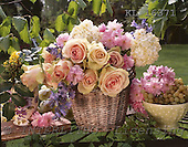 Interlitho, Alberto, FLOWERS, photos, basket, roses, KL16371,#f# Blumen, Natur, flores, naturaleza
