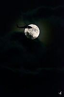 On 9/13/2019, there was a rumored uprising on the Harvest Moon. At 8:23:05PM, ET, a millitary Black Hawk helicopter was in the air, on the way to invade the Moon... <br /> But it turned out, it was all the photographer's wild imagination. The Moon is still a quiet and beautiful place. Peace and Love!