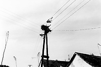 Hungary. Baranya county. Al Soszenmarton is a gypsie village. Storks nest on top of electric pillar. Stork flying. Storks are large, long-legged, long-necked wading birds with long, stout bills. Roofs tiles on houses. The Romani people, also known as the Roma, are an Indo-Aryan people group, traditionally nomadic itinerants living mostly in Europe. The Romani people are widely known in English by the exonym Gypsies (or Gipsies), which is considered by many Romani people to be pejorative due to its connotations of illegality and irregularity as well as its historical use as a racial slur. In many other languages, they are called Roms (Rroms), Tziganes,Tsiganes, Gitans, Bohémiens, Manouches, Romanichels, gitano, zingaro and cigano. 13.05.95 © 1995 Didier Ruef