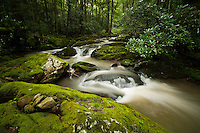 Cascades along Rocky Fork, brown water due to substantial  logging operation at headwaters along Blockstand creek