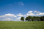 Europa, DEU, Deutschland, Nordrhein Westfalen, NRW, Rheinland, Niederrhein, Xanten, Agrarlandschaft, Fuerstenberg, Feld, Acker, Himmel, Wolken, Baeume, Kategorien und Themen, Landwirtschaft, Landwirtschaftlich, Agrar, Agrarwirtschaft, Natur, Naturfoto, Naturfotos, Naturfotografie, Naturphoto, Naturphotographie, Landschaft, Landschaften, Landschaftsfoto, Landschaftsfotografie, Landschaftsphoto, Landschaftsphotographie......[Fuer die Nutzung gelten die jeweils gueltigen Allgemeinen Liefer-und Geschaeftsbedingungen. Nutzung nur gegen Verwendungsmeldung und Nachweis. Download der AGB unter http://www.image-box.com oder werden auf Anfrage zugesendet. Freigabe ist vorher erforderlich. Jede Nutzung des Fotos ist honorarpflichtig gemaess derzeit gueltiger MFM Liste - Kontakt, Uwe Schmid-Fotografie, Duisburg, Tel. (+49).2065.677997, schmid.uwe@onlinehome.de, www.image-box.com]
