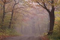 Fog shrouds fall foliage on a dirt road in Baxter State Park, Maine.