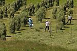 Austria, Tyrol, Innsbruck Holiday Village: Gries at Sellrain, farmers at hay making | Oesterreich, Tirol, Innsbrucks Feriendorf: Gries im Sellrain, Bauern bei der Heuernte