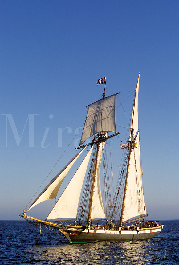 Replica of a privateer, The Lynx