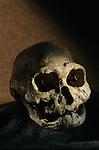Early Genus Homo (erectus & habilis)