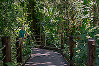 A tourist follows the boardwalk through the rain forest at Hawaii Tropical Botanical Garden, Papa'ikou, Big Island of Hawaiʻi.