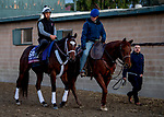 October 31, 2019: Breeders' Cup Turf Sprint entrant Shekky Shebaz, trained by Jason Servis, exercises in preparation for the Breeders' Cup World Championships at Santa Anita Park in Arcadia, California on October 31, 2019. Carlos Calo/Eclipse Sportswire/Breeders' Cup/CSM