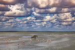 Kenya, Chyulu Hills National Park, common wildebeest (Connochaetes taurinus) and flamingos (Phoeniconaias sp.)