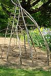 Mary Ann Banks organic garden. Bean climbing teepee.
