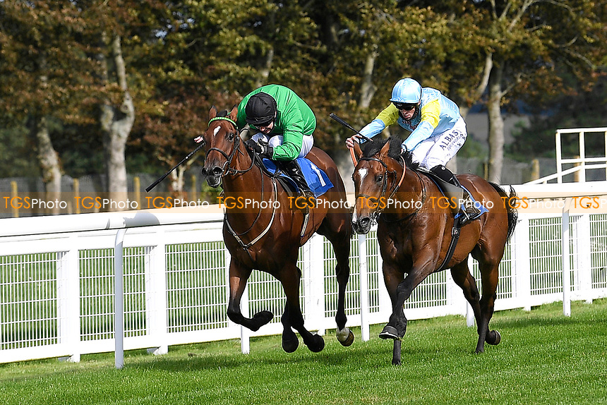 Winner of The Radcliffe & Co Novice Median Auction Stakes (Div 1) Tornadic ridden by Charles bishop and trained by Eve Johnson Haughton during Horse Racing at Salisbury Racecourse on 11th September 2020