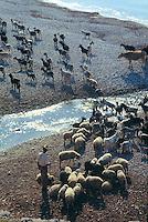 - pastore e greggie di pecore e capre sulla spiaggia di  Qeparò, nel sud del paese....- shepherd and herd of sheeps and goats on the beach of Qeparò, in the south of the country