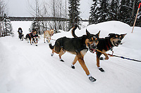 Sunday February 28, 2010  Guillermo Anton on the trail shorlty before finishing the Junior Iditarod Sled Dog Race. Willow , AK
