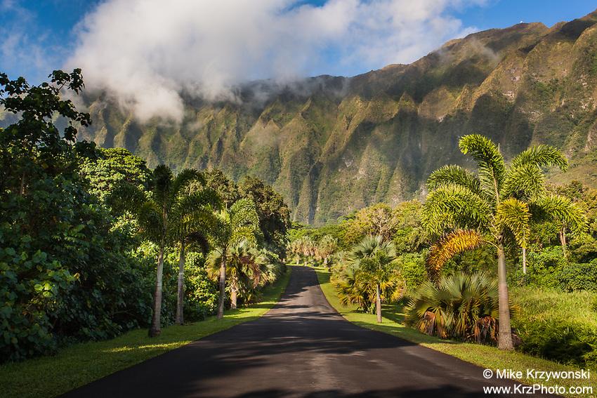 Road leading to Ho'omaluhia Botanical Garden, Kaneohe, Oahu, Hawaii