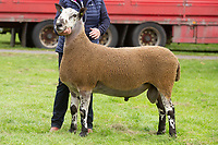 Kelso Ram Sale 2018<br /> Lot 492 8000gns   bfl WH Sharp and Son,Newbigging Walls<br /> ©Tim Scrivener Photographer 07850 303986<br />      ....Covering Agriculture In The UK....