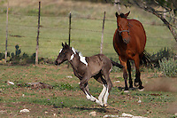 Frisky Spring babe with Dad in tow. Central Texas Hill Country.